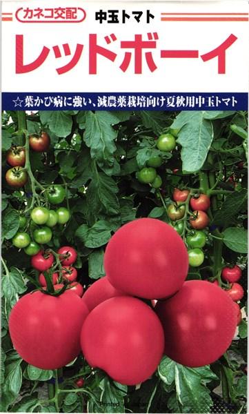 中玉トマト 種 『レッドボーイ』 1000粒 カネコ種苗