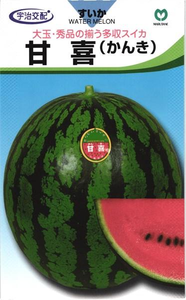大玉スイカ 種 『甘 喜 (かんき)』 200粒 丸種