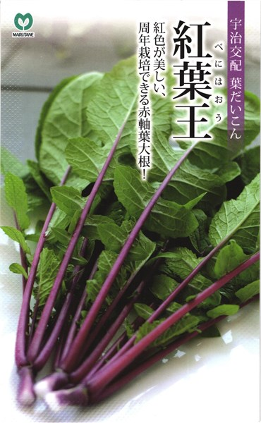 葉ダイコン 種 『紅葉王』 2dl 丸種