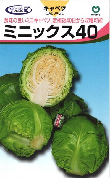 夏秋どりキャベツ 種 『ミニックス40』 種 コート5000粒 丸種, MAVAZI(インポートクロージング):64cb635e --- idelivr.ai