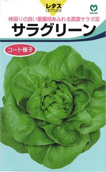 リーフレタス 種 『サラグリーン』 コート5000粒 丸種