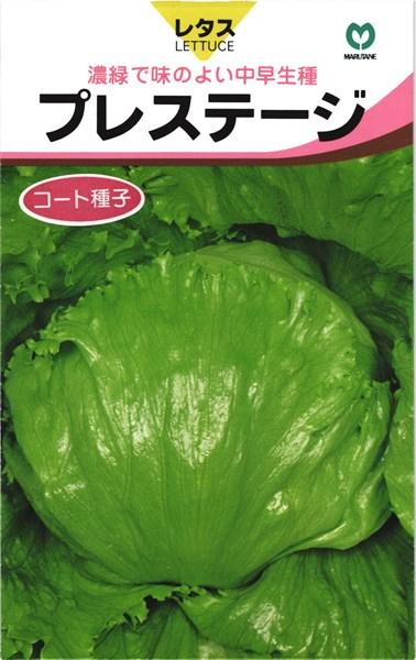 玉レタス 種 『プレステージ』 コート5000粒 丸種