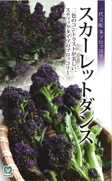 紫茎ブロッコリー 種 『スカーレットダンス』 1000粒 丸種