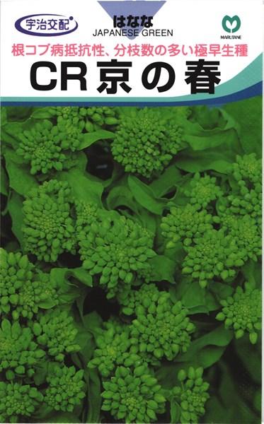 極早生ナバナ 種 『CR京の春』 2dl 丸種