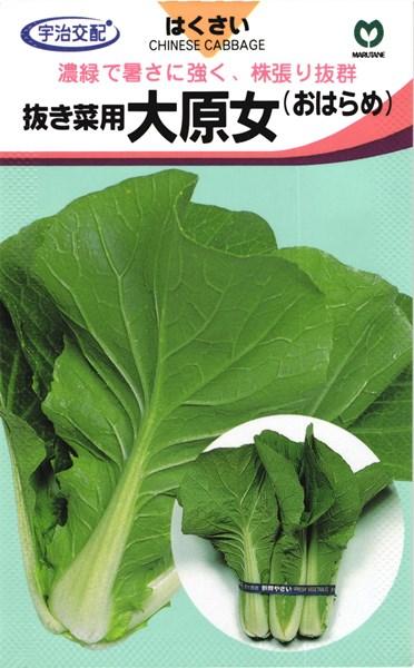 抜き菜用ハクサイ 種 『大原女/おはらめ』 2dl 丸種