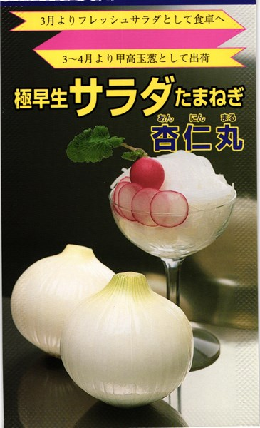 超極早生タマネギ 種 『杏仁丸』 2dl 松永種苗
