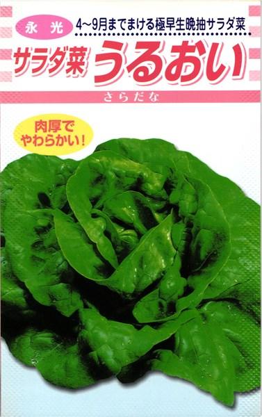 サラダ菜 種 『うるおい』 2dl 松永種苗