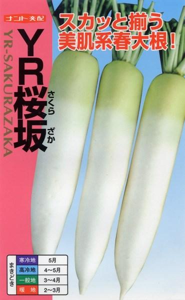 ダイコン 種 『YR-桜坂』 コート5000粒 ナント種苗