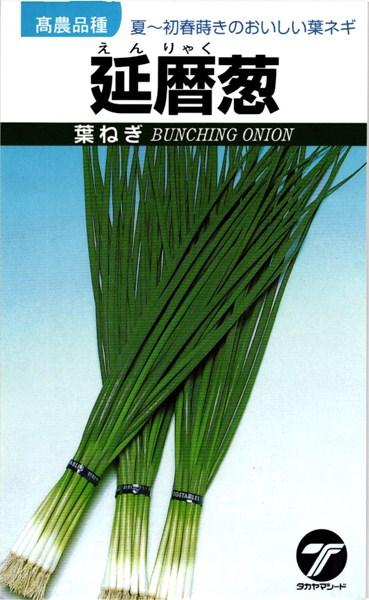 葉ネギ 種 『延暦葱』 1L タカヤマシード
