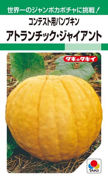 ジャンボカボチャ 種 『アトランチック・ジャイアント』 1L タキイ種苗