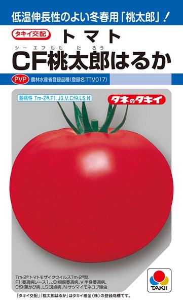 トマト 種 『CF桃太郎はるか』 1000粒 タキイ種苗