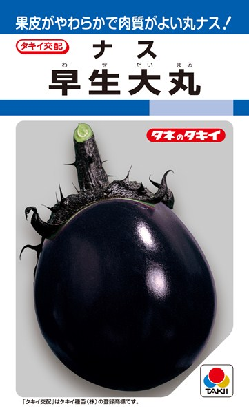 丸ナス 種 『早生大丸』 2000粒 タキイ種苗
