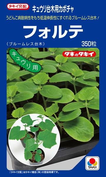 キュウリ台木(ブルームレス) 種 『フォルテ』 350粒 タキイ種苗