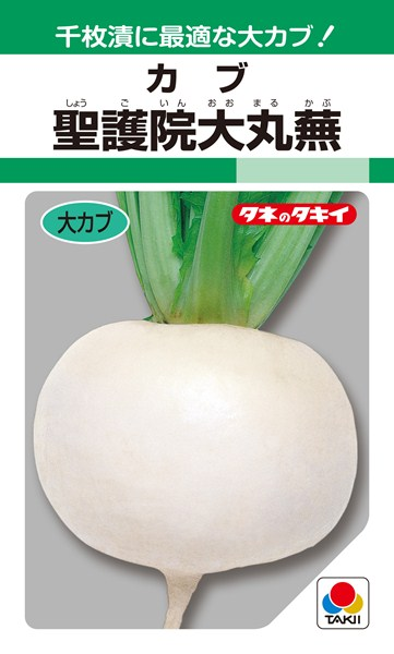 中、大カブ 種 『聖護院大丸蕪』 1L タキイ種苗