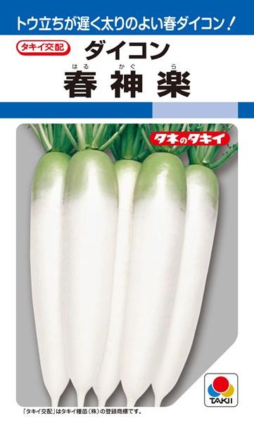 春~夏どりダイコン 種 『春神楽』 ペレット3L5000粒 タキイ種苗