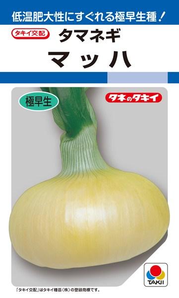 タマネギ 種 『マッハ』 2dl タキイ種苗