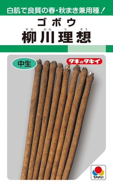 ゴボウ 種 『柳川理想』 1L タキイ種苗
