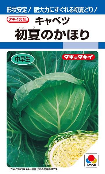 初夏どりキャベツ 種 『初夏のかほり』 ペレットL5000粒 タキイ種苗