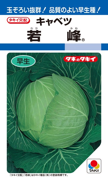 夏秋どりキャベツ 種 『若峰』 ペレットL5000粒 タキイ種苗
