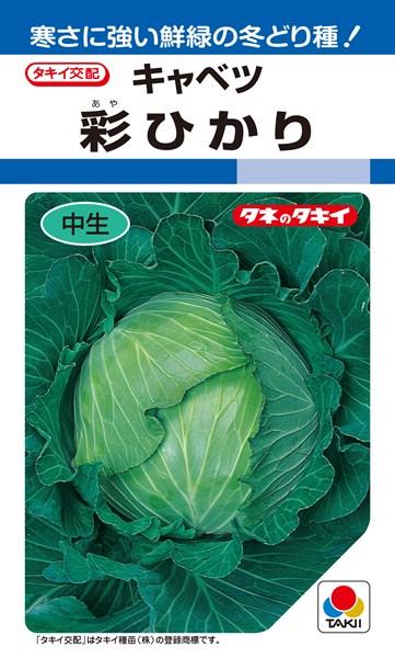 年内~冬どりキャベツ 種 『彩ひかり』 ペレットL5000粒 タキイ種苗