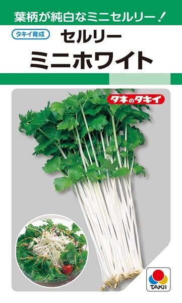 セルリー 種 『ミニホワイト』 1dl タキイ種苗