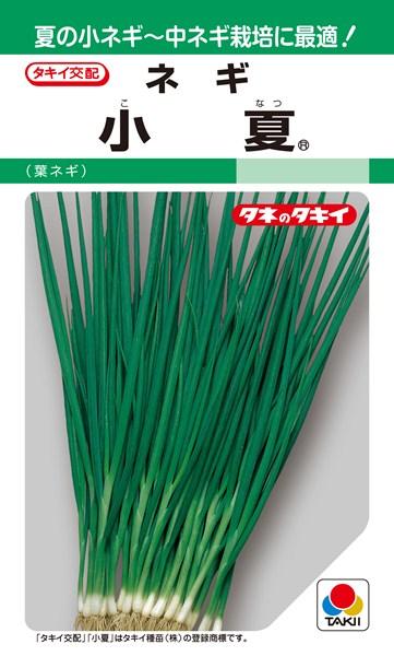 葉ネギ 種 『小夏』 1L タキイ種苗