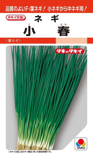 葉ネギ 種 『小春』 1L タキイ種苗