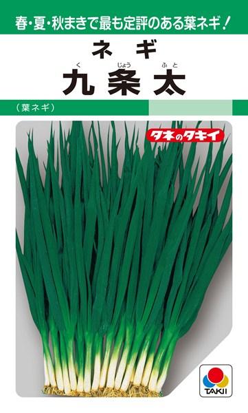 葉ネギ 種 『九条太』 1L タキイ種苗