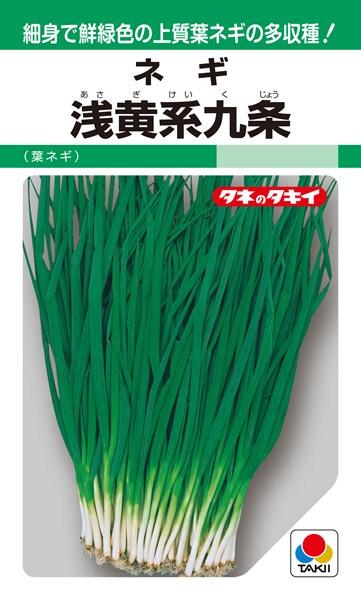 葉ネギ 種 『浅黄系九条』 1L タキイ種苗