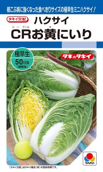 メール便 OK 白菜 たね ミニハクサイ 種 タキイ種苗 20ml CRお黄にいり AHA05N 未使用 超特価SALE開催
