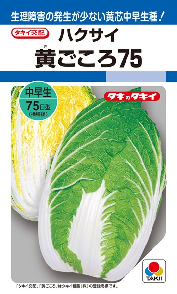 黄芯ハクサイ 種 『黄ごころ75』 ペレットL5000粒 タキイ種苗