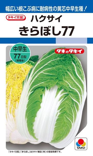 黄芯ハクサイ 種 『きらぼし77』 ペレットL5000粒 タキイ種苗