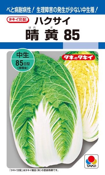 黄芯ハクサイ 種 『晴黄85』 ペレットL5000粒 タキイ種苗