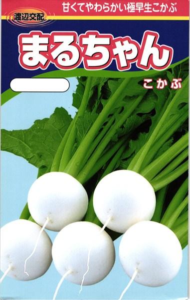 小カブ 種 『まるちゃん』 2dl 渡辺農事
