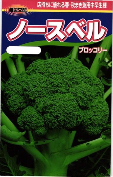 ブロッコリー 種 『ノースベル』 コート5000粒 渡辺農事