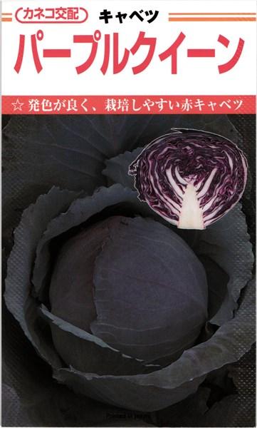 カネコ種苗 キャベツ パープルクイーン コート5000粒