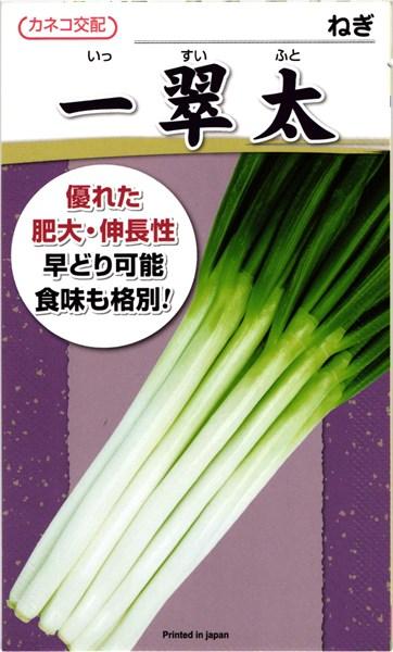 カネコ種苗 ネギ 一翠太 コート5000粒