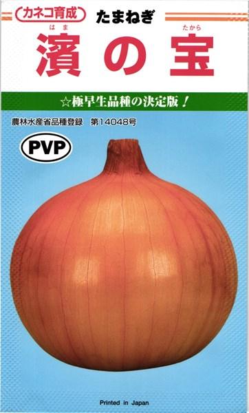 カネコ種苗 タマネギ 玉ねぎ 濱の宝 コート5000粒