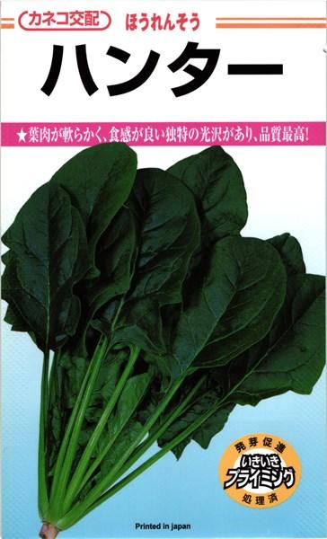 葉肉が軟らかく 食感が良い 独特の光沢があり 品質最高 カネコ種苗 ハンター 正規認証品 新作販売 新規格 M 3万粒 ほうれん草 ホウレンソウ