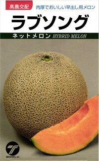 肉厚でおいしい早出し用メロン たね タカヤマシード メロン 在庫あり 種子 ラブソング 当店は最高な サービスを提供します 100粒