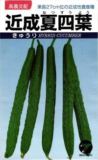 果長27cm位の近成性豊産種 売り出し たね タカヤマシード 20ml キュウリ 店内全品対象 近成夏四葉