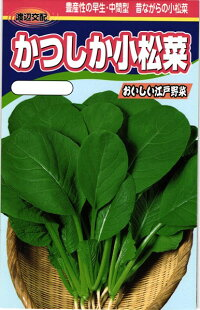 ボリューム感のある早生種 昔ながらの小松菜の味 限定価格セール 渡辺農事 毎週更新 コマツナ 2dl 小松菜 かつしか