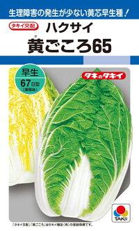 タキイ種苗 ハクサイ 白菜 黄ごころ65        ペレット 小袋 5000粒