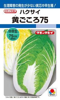 タキイ種苗 ハクサイ 白菜 黄ごころ75 20ml