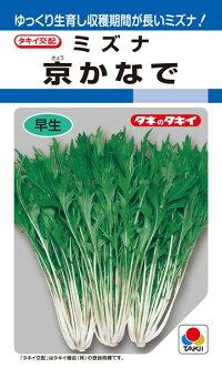 タキイ種苗 ミズナ 水菜 京かなで 2dl
