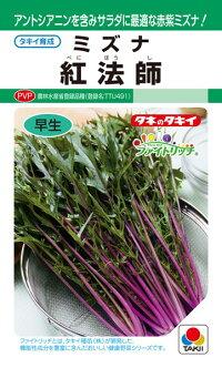 葉と葉柄のコントラストが美しい赤紫ミズナ セール商品 タキイ種苗 ミズナ 水菜 PVP 紅法師 チープ 20ml