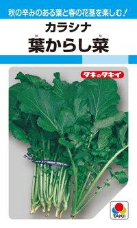 秋には辛みのある葉を ◆高品質 春には花茎の浅漬を楽しむ タキイ種苗 葉からし菜 1L ハイクオリティ 葉菜