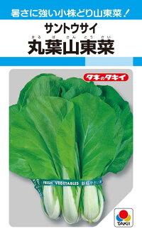 暑さに強い小株どり山東菜 タキイ種苗 葉菜 卸売り 丸葉山東菜 贈り物 1L