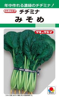 暑さ 寒さに強く 年中おいしい 濃緑のチヂミナ 予約販売 タキイ種苗 葉菜 選択 みそめ 20ml
