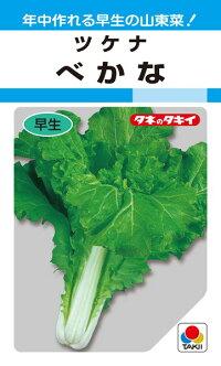 タキイ種苗 葉菜 べかな 1L